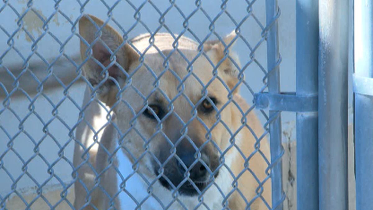 Investigation into Oxford Animal Shelter finds no criminal wrongdoing