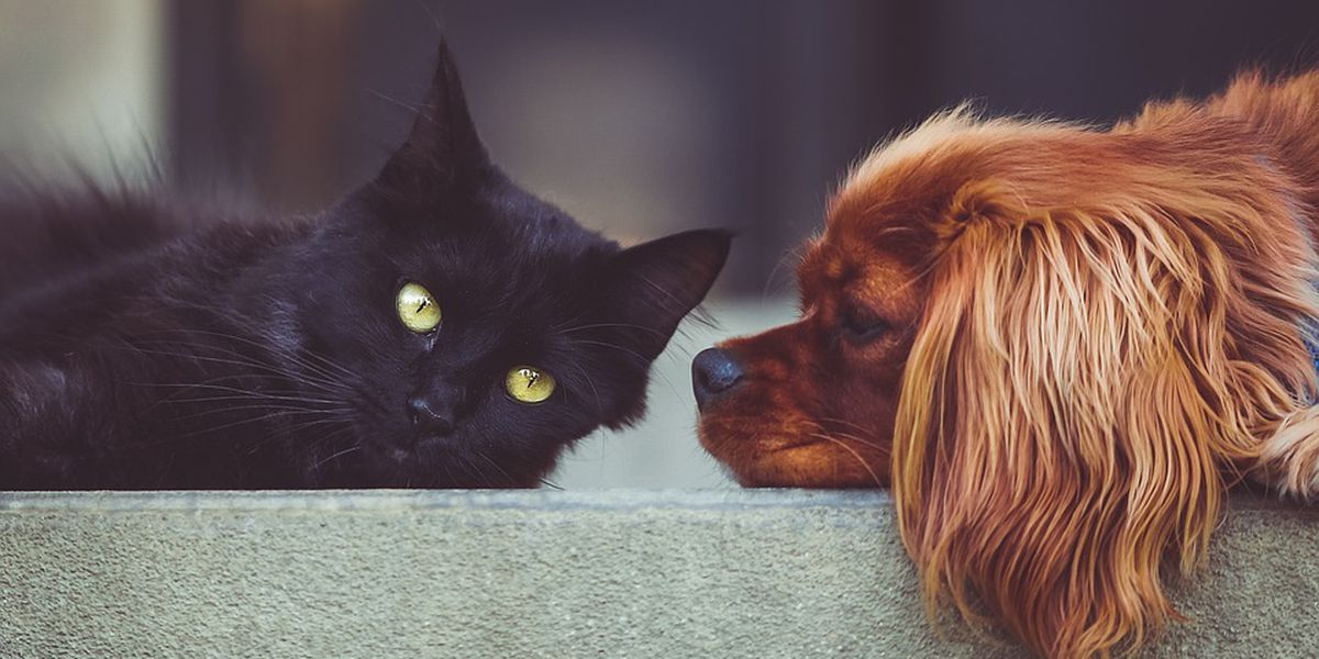 FDA Links Popular Flea, Tick Medications To Neurological Problems In Dogs, Cats