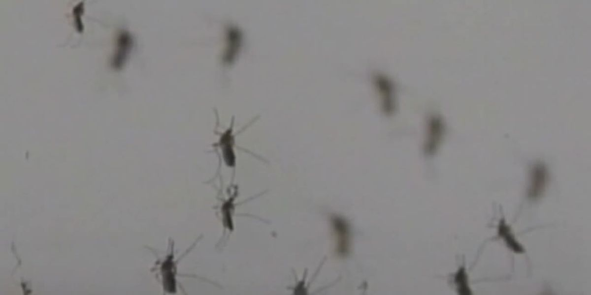 Mosquito traps in 4 zip codes test positive for West Nile Virus