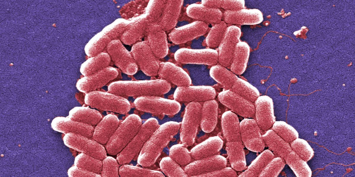 Best Life: New methods to help fight off superbugs during pandemic