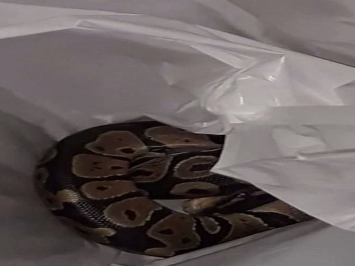 'I screamed so loud': Fla. woman finds python when she reaches into washer