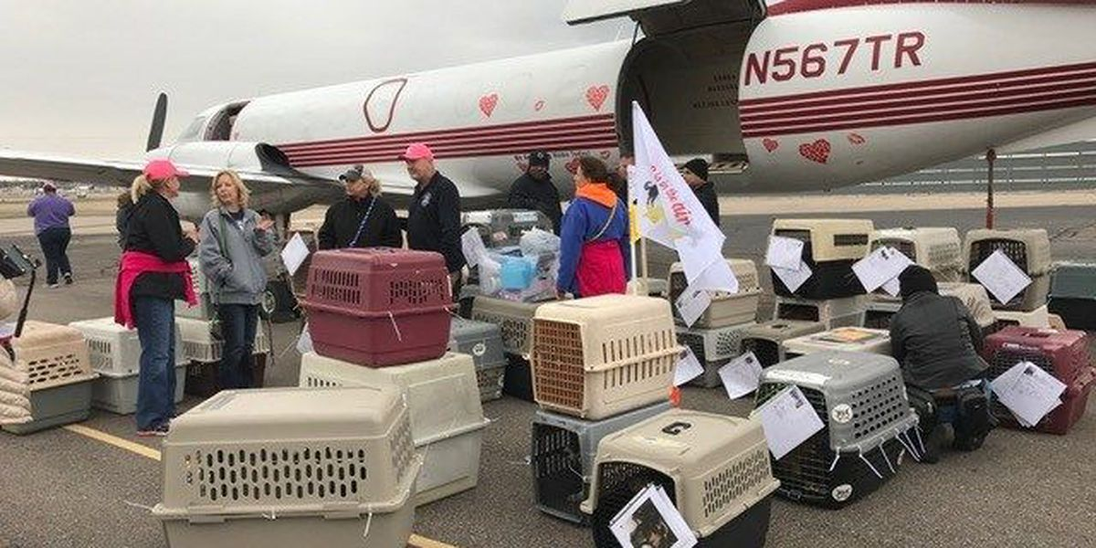 Wings of Rescue saves 450 Mid-South pets