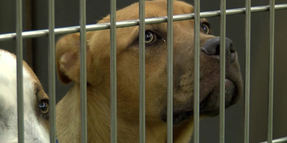 'Clear the Shelters Day' hopes to provide homes for pets