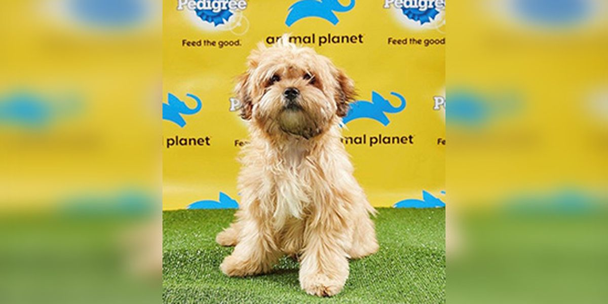 Humane society dog featured in Animal Planet's Puppy Bowl