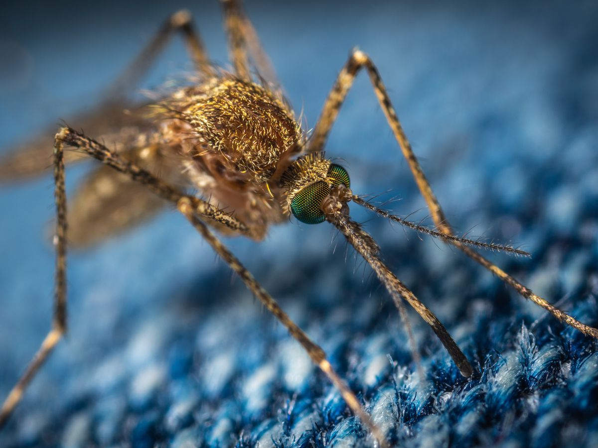 Two new cases of West Nile Virus reported, brings state total to five