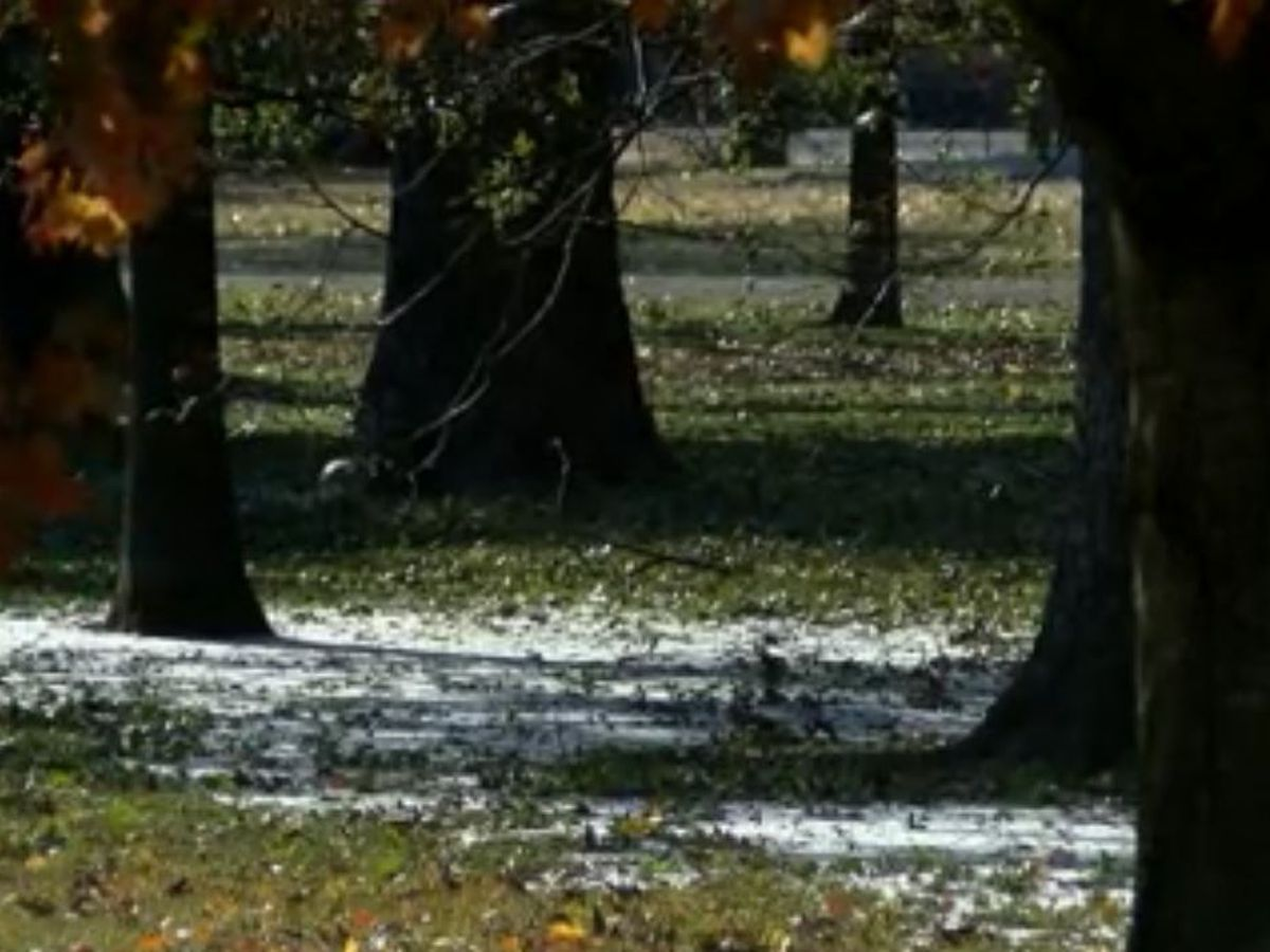 Yellow, orange and white? Mid-South snowfall makes an appearance amid fall foliage