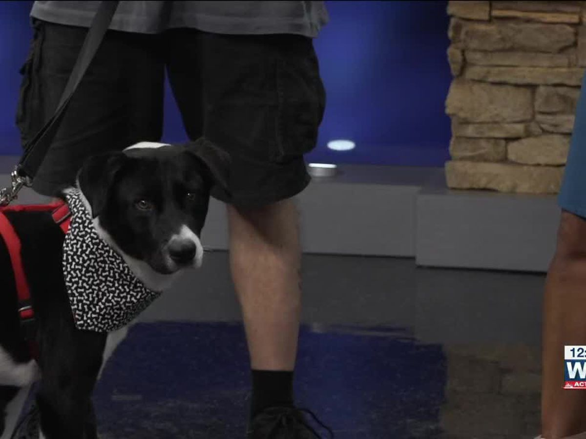 Pet of the Week: Dino the cow dog