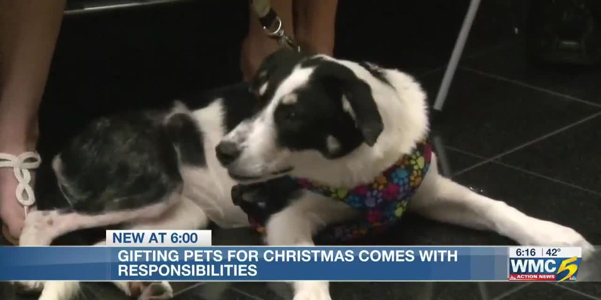 Memphis Animal Services gives tips on adopting pets for Christmas