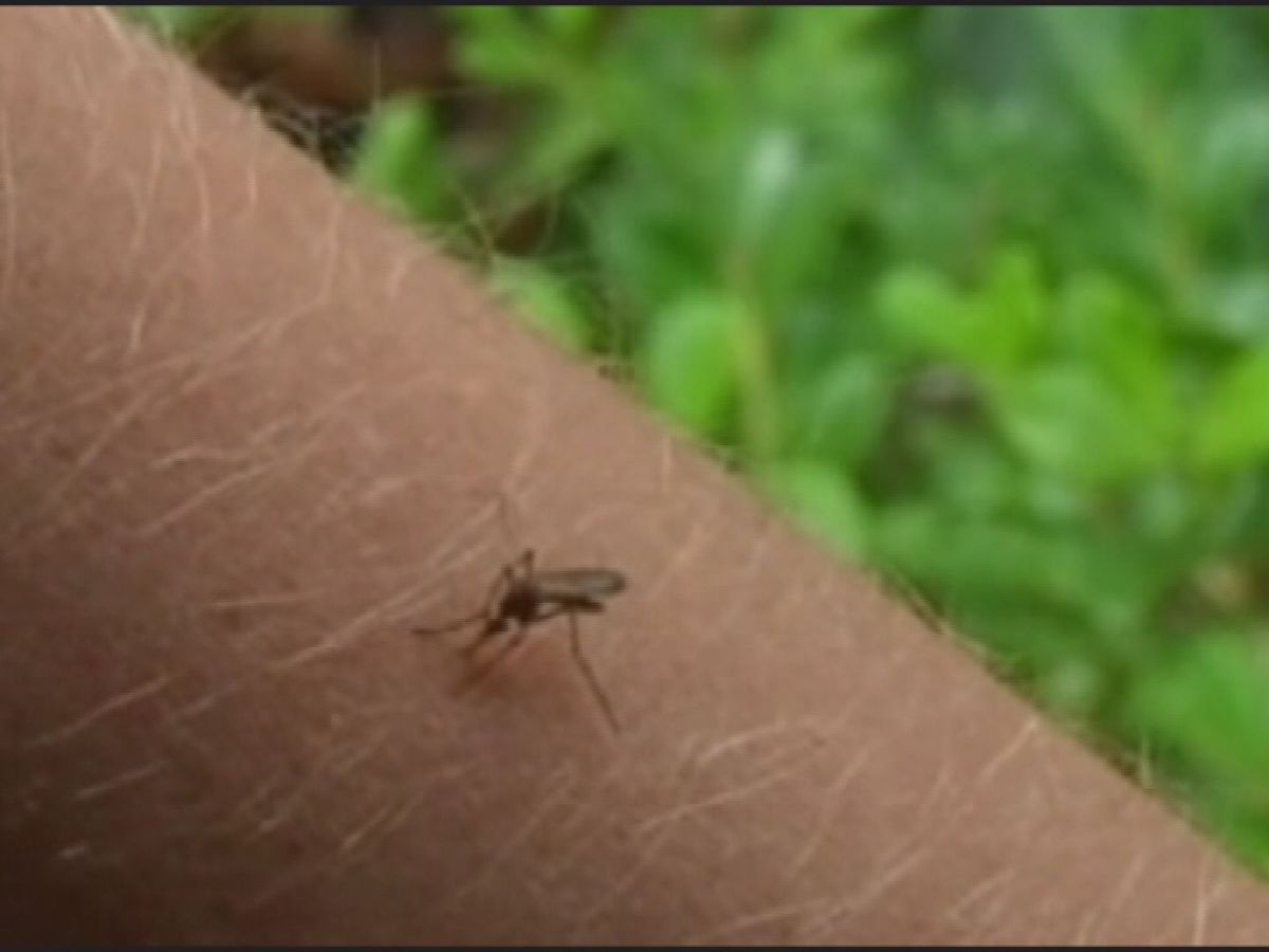 Shelby County spraying for mosquitoes after positive West Nile Virus tests