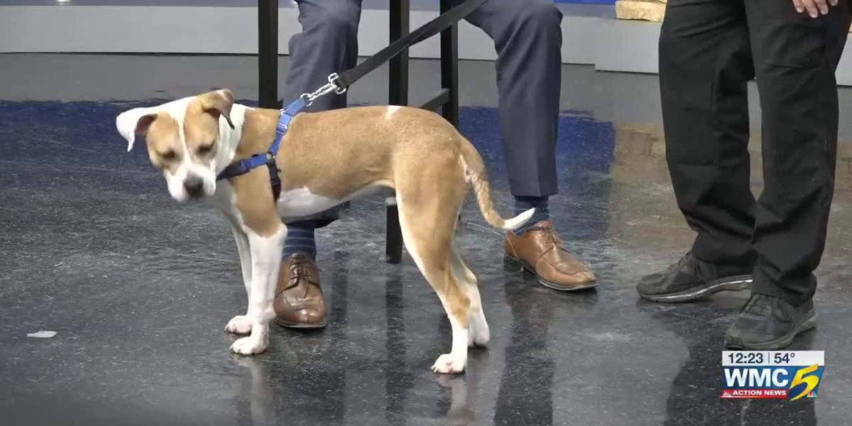 Pet of the Week: Joey