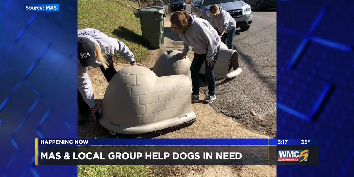 MAS gives dog homes to dogs in need