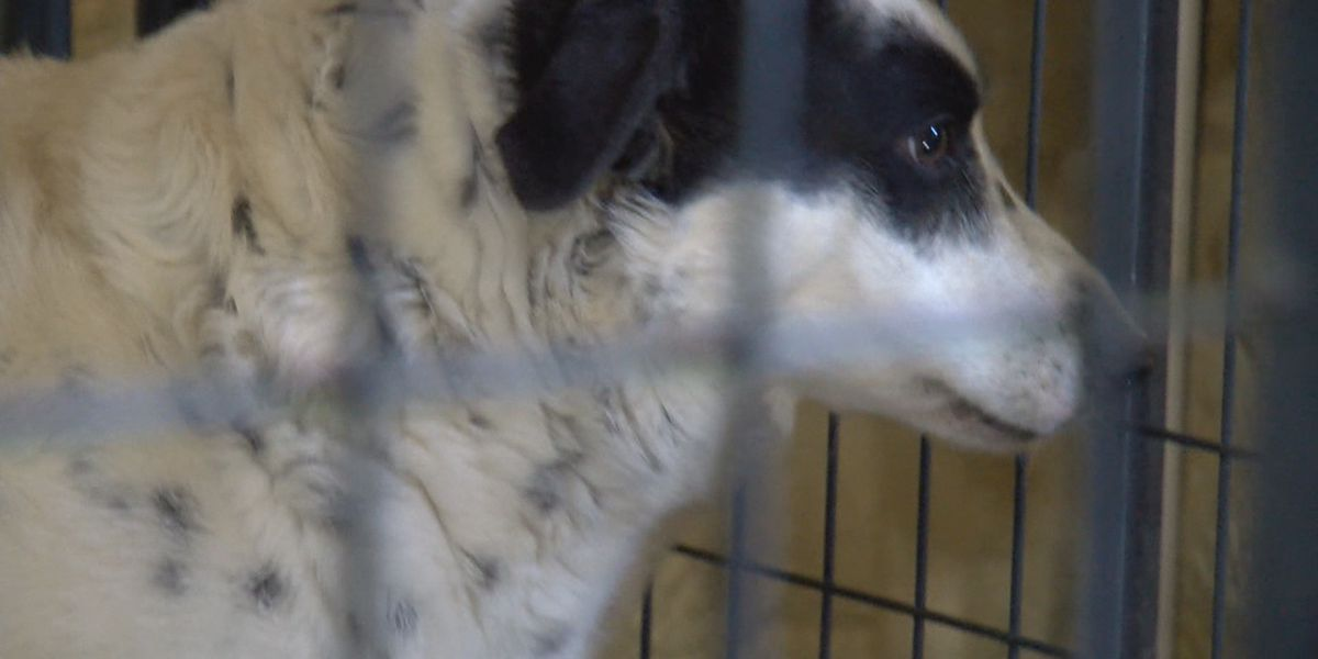 Wynne animal group asking community for help