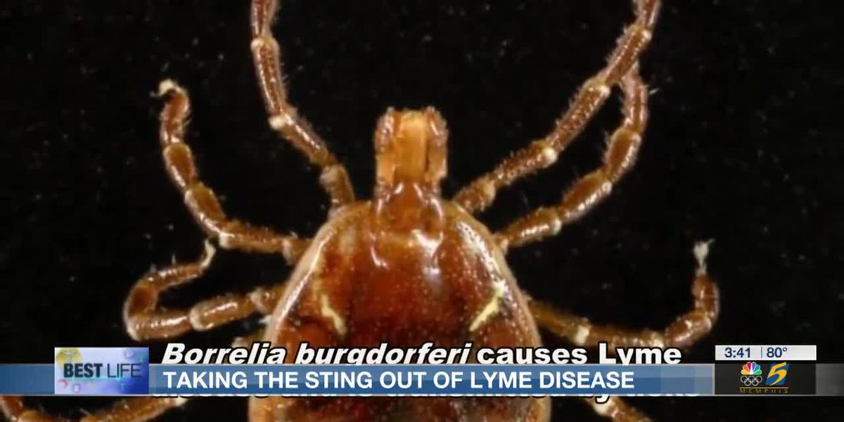 Best Life: Taking the sting out of lyme disease