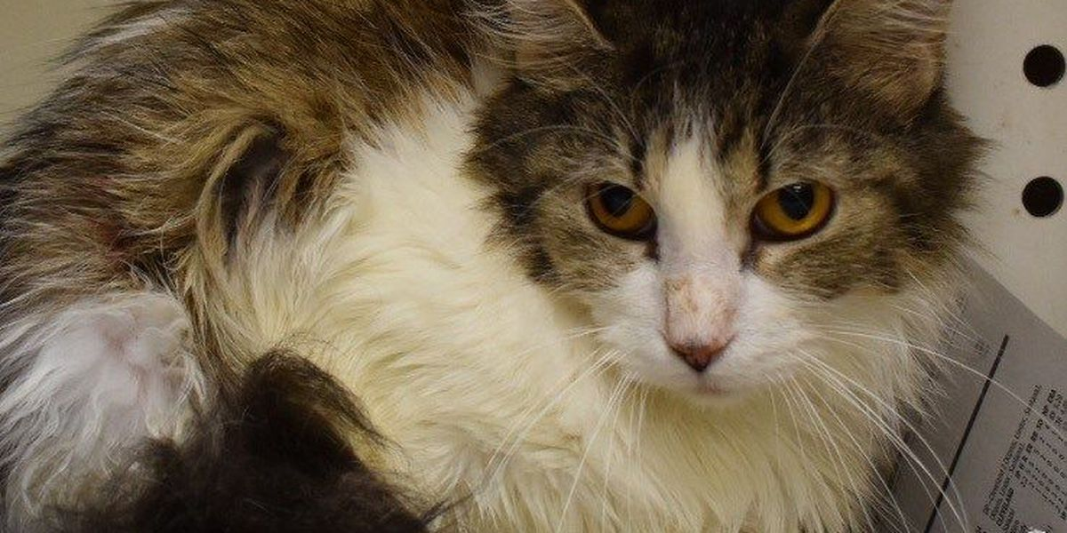 MAS needs cat adoptions after 21 surrendered from owner