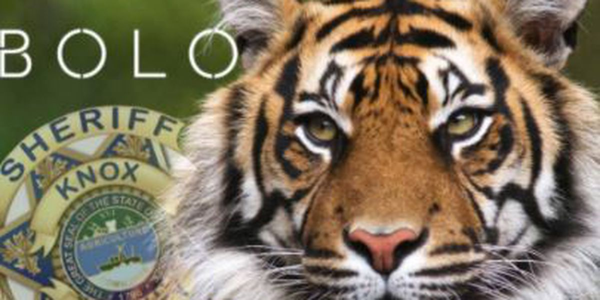 Tennessee tiger trail goes cold, says agency leading the search