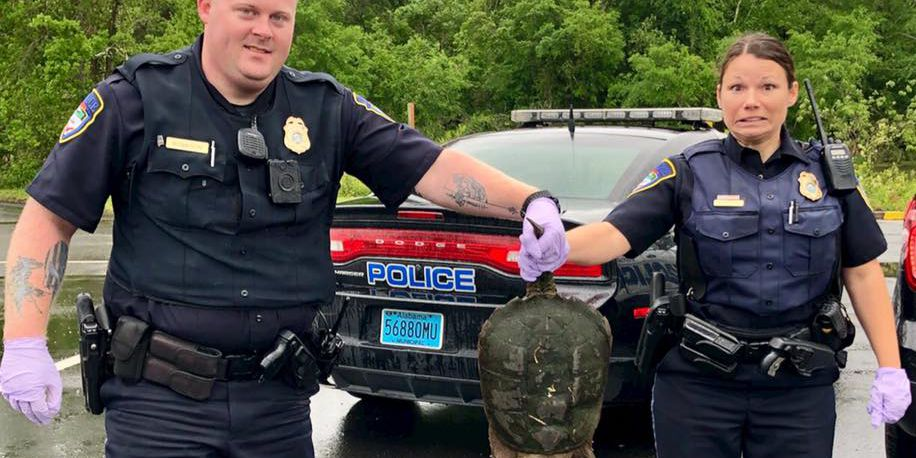 Police find trespassing 'ninja' turtle, release it with a warning