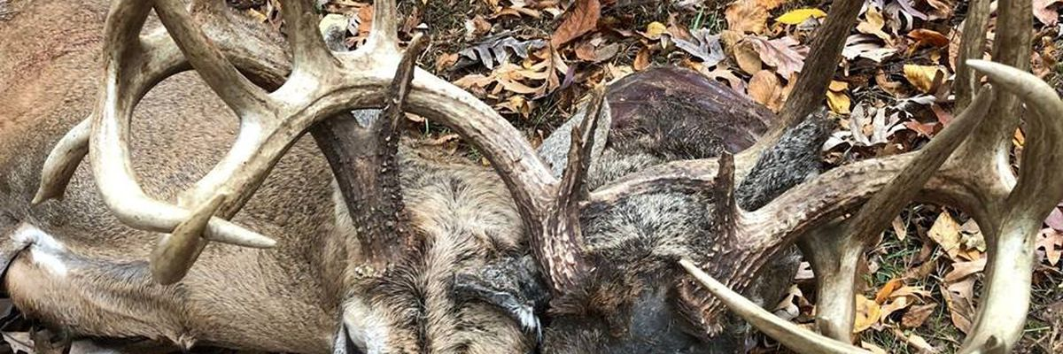 'Two-headed' deer killed in Ballard Co., KY