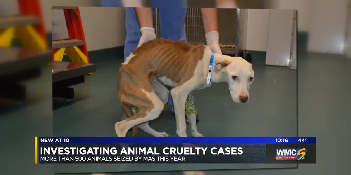 Prosecuting animal cruelty cases