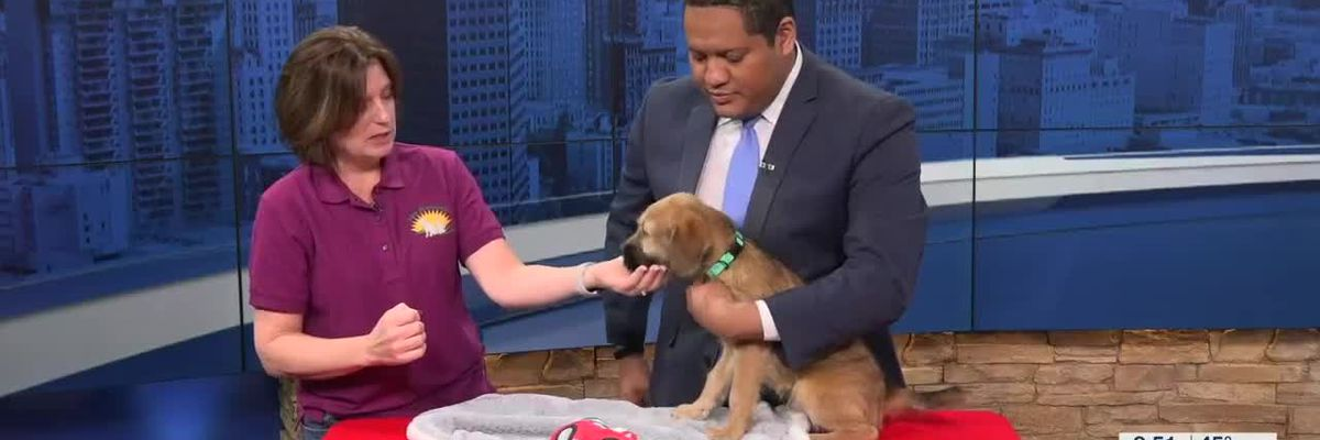 New Beginnings Animal Rescue Pet of the Week: Buddy