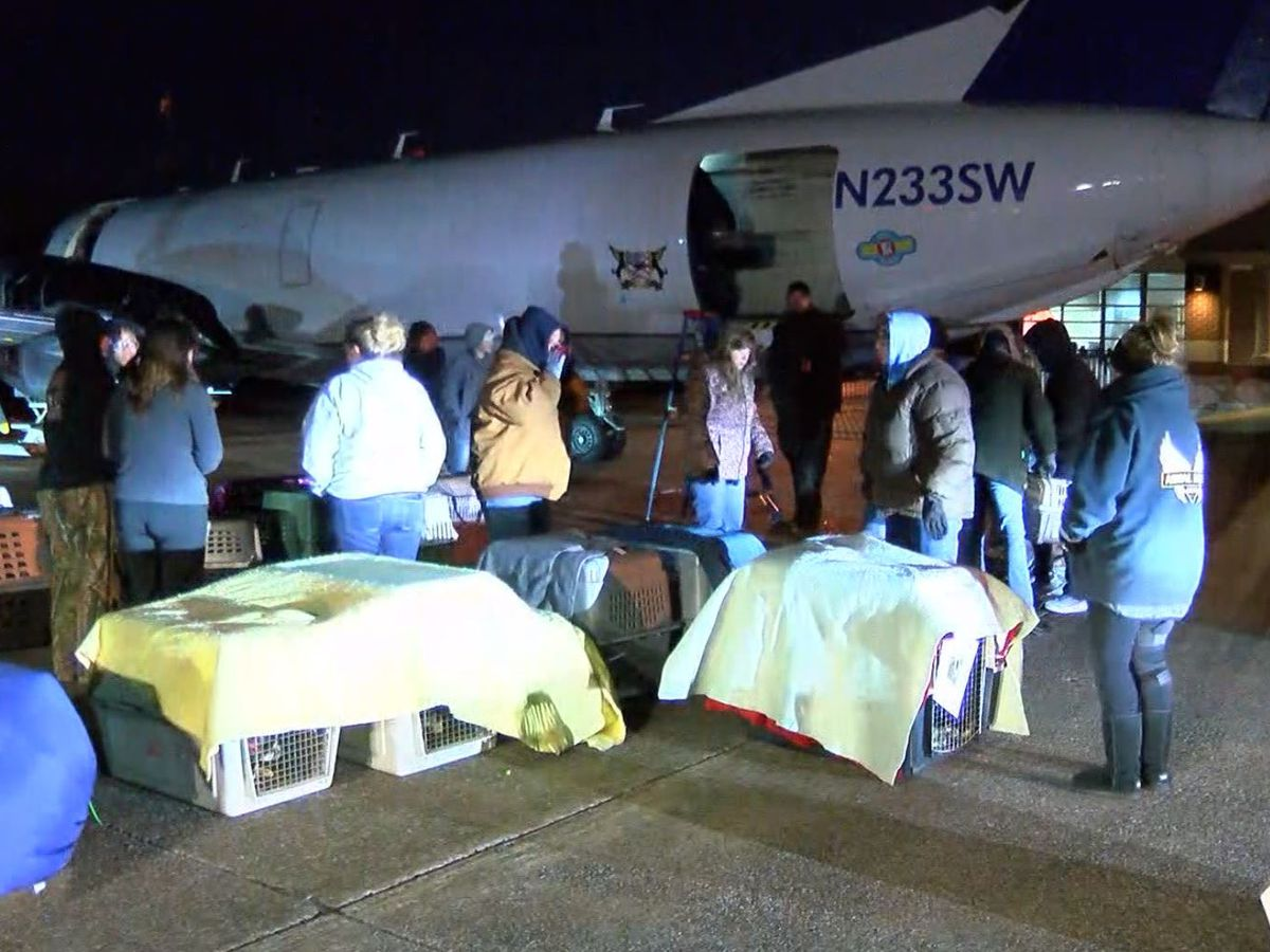 225 Mid-South animals boarded on flight to find forever homes