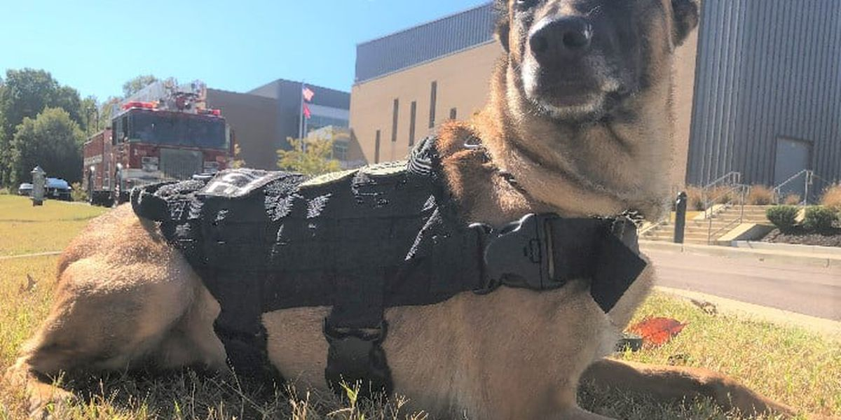 Germantown Police K9 Jinx passes away