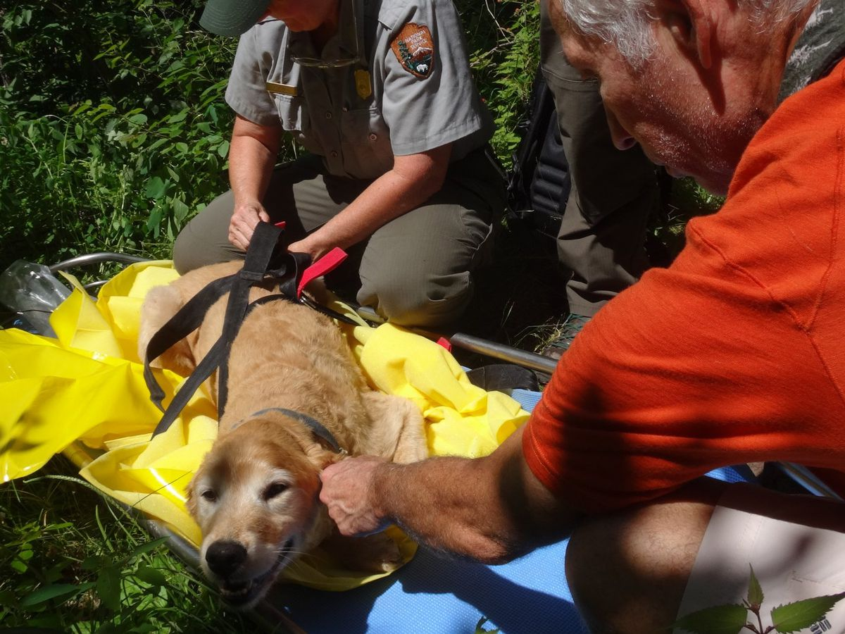 Lost dog rescued after 11 days in Shenandoah National Park