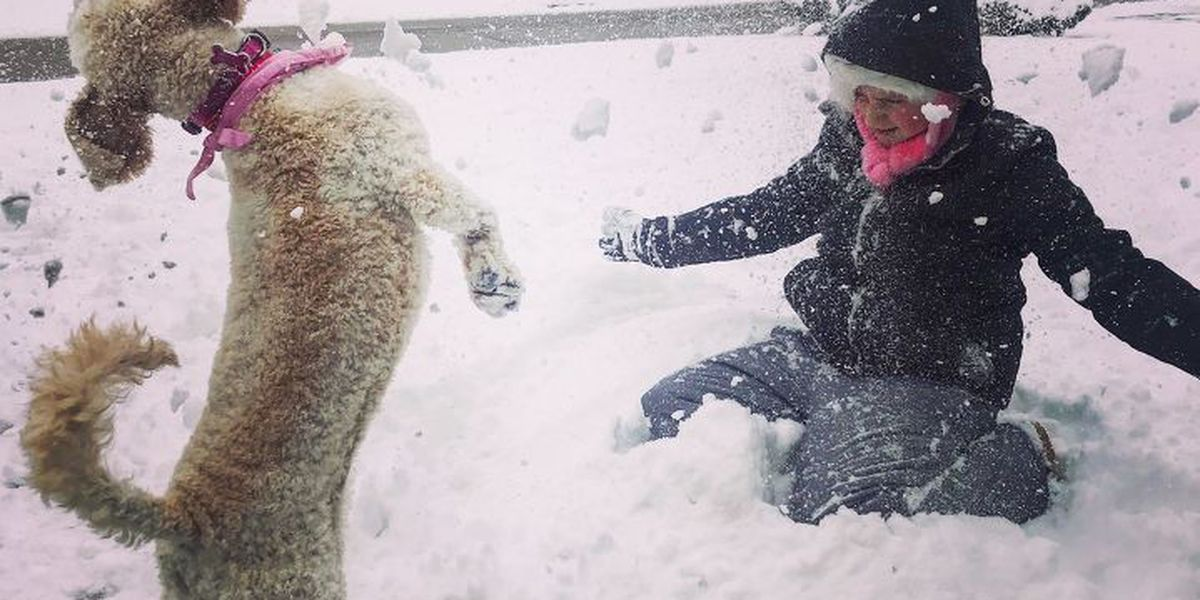 Memphians enjoy snow day before next round of winter weather
