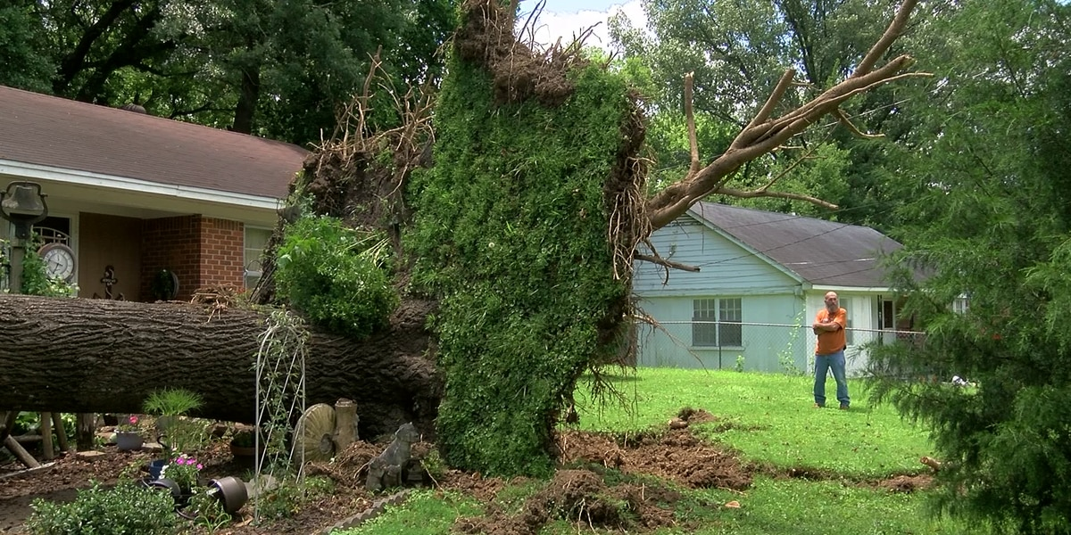 Severe storms bring down trees, power lines causing outages across Shelby County