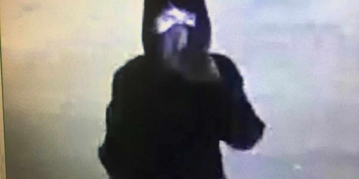 Collierville PD releases photo of school vandalism suspect