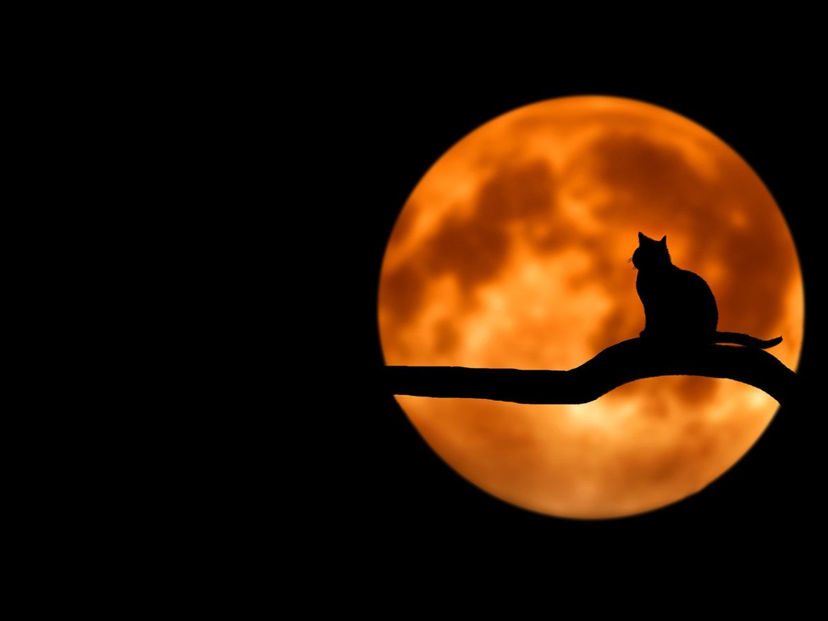 Breakdown: Why a full moon on Halloween is so rare