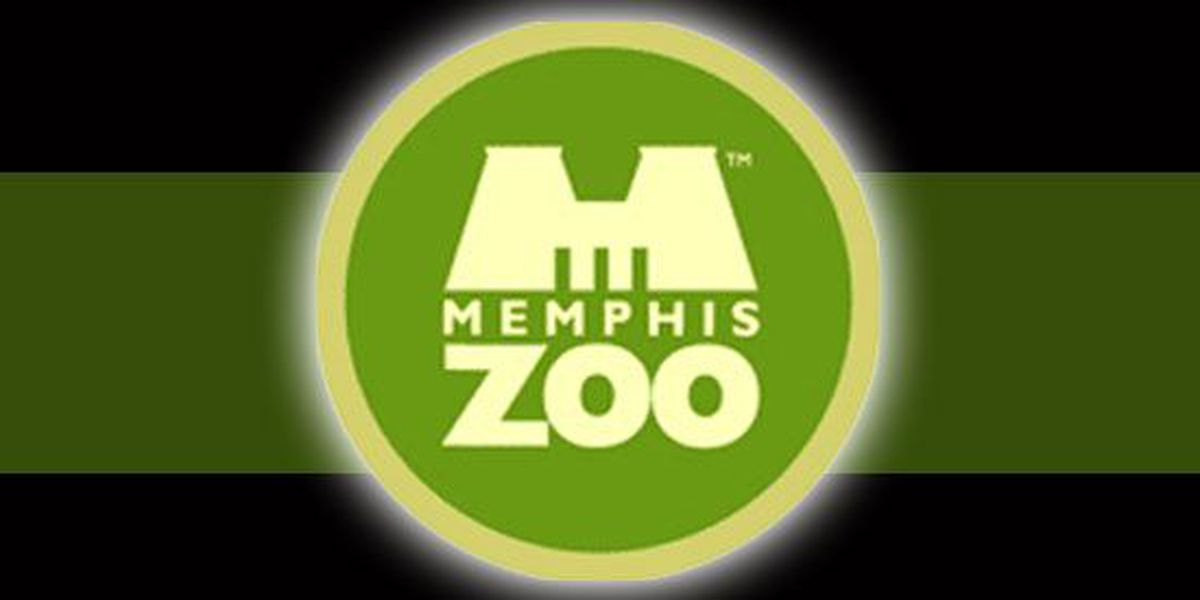 Memphis Zoo looking to hire 100 team members