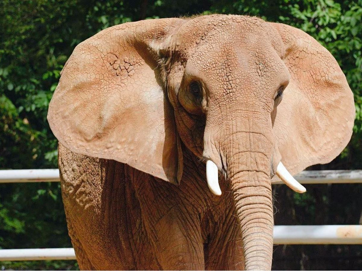 'Worst zoo for elephants': Memphis Zoo responds to animal activist's claims