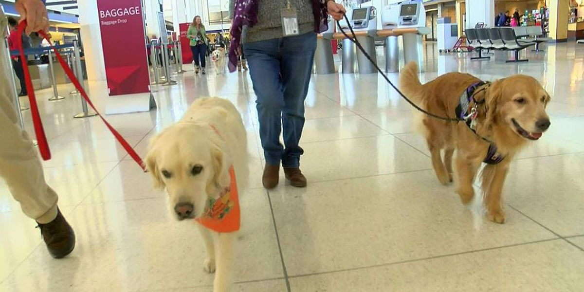 Airport Memphis brings in therapy dogs to comfort travelers