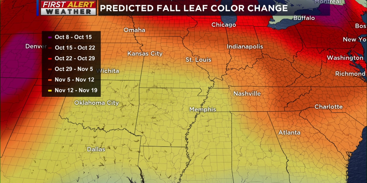 Breakdown: Why leaves change color