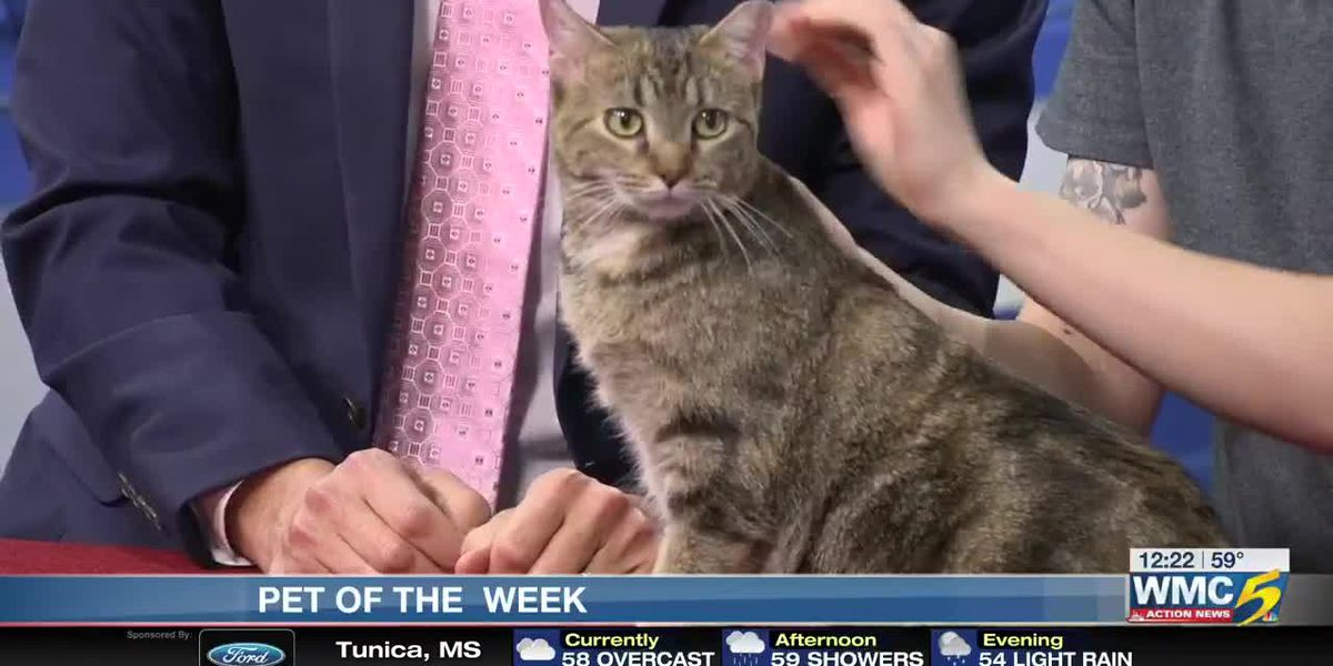 Pet of the Week: Kickoff