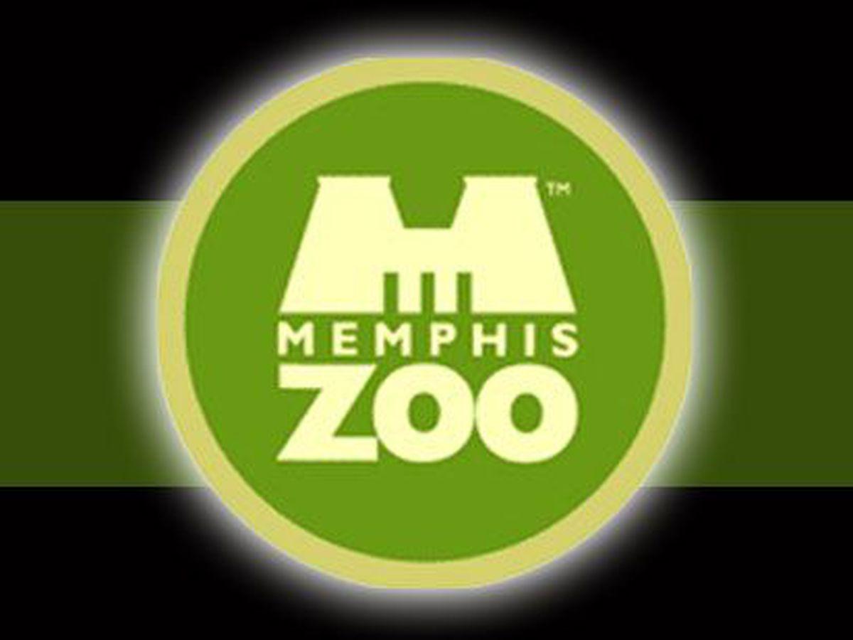 Memphis Zoo looking to hire 100 team members