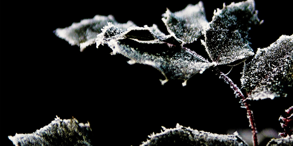Breakdown: Why temperatures don't have to be freezing for frost