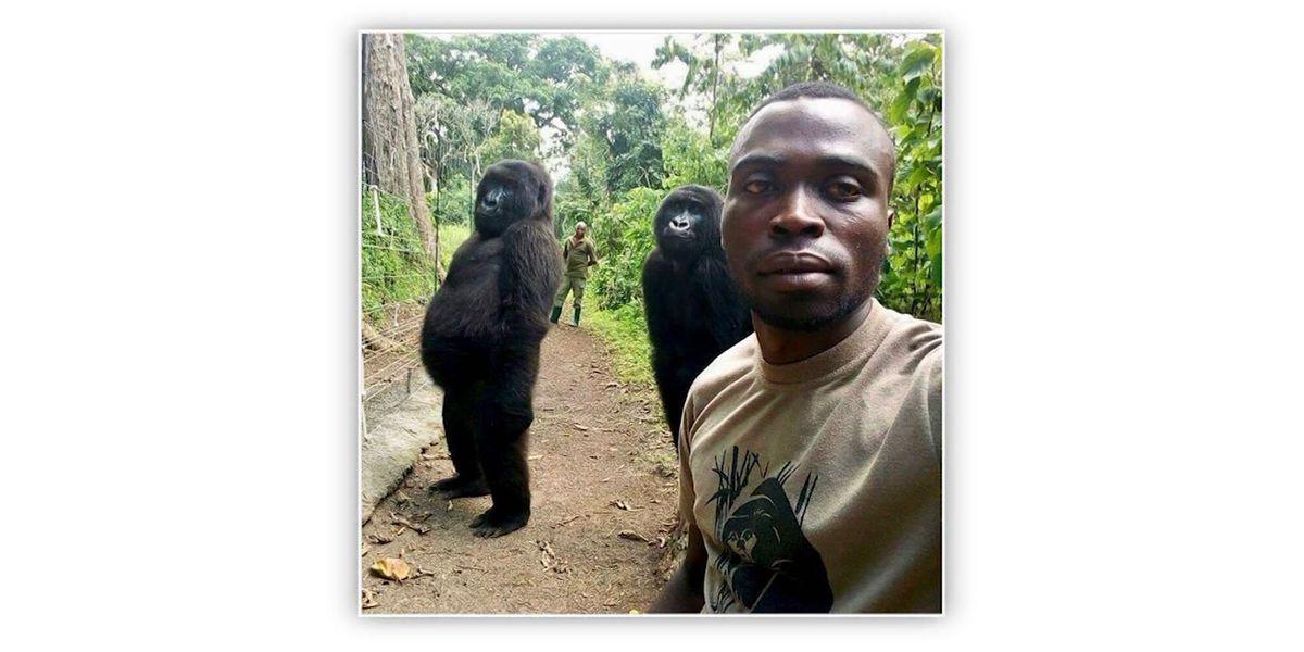 Park ranger selfie: Gorillas vogue for camera