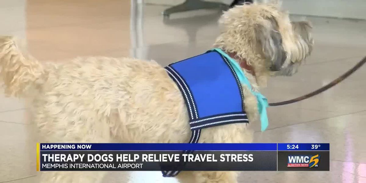 Therapy dogs comfort holiday travelers at Memphis International Airport
