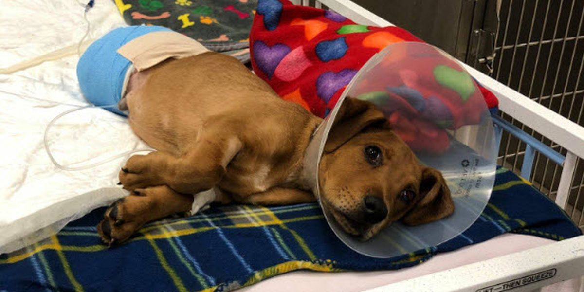 Puppy deemed a 'miracle' after surviving train collision in Hamilton