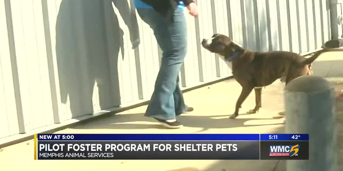 Foster program helps Memphis animals find forever homes