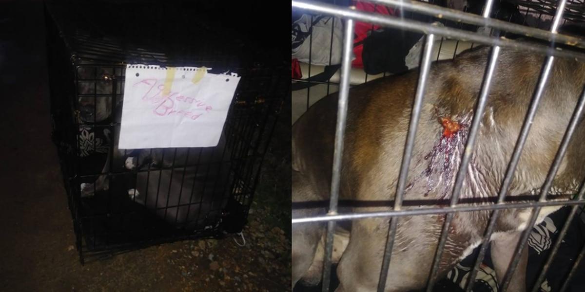 Good Samaritan finds dog shot, left in cage on side of road