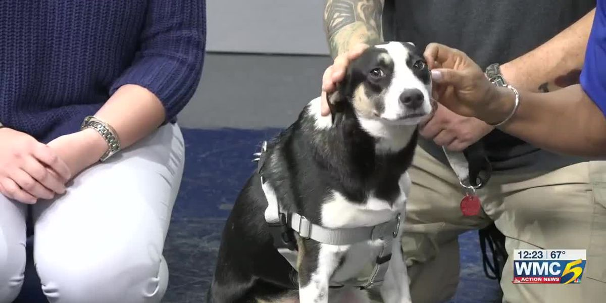 Pet of the Week: Sparky