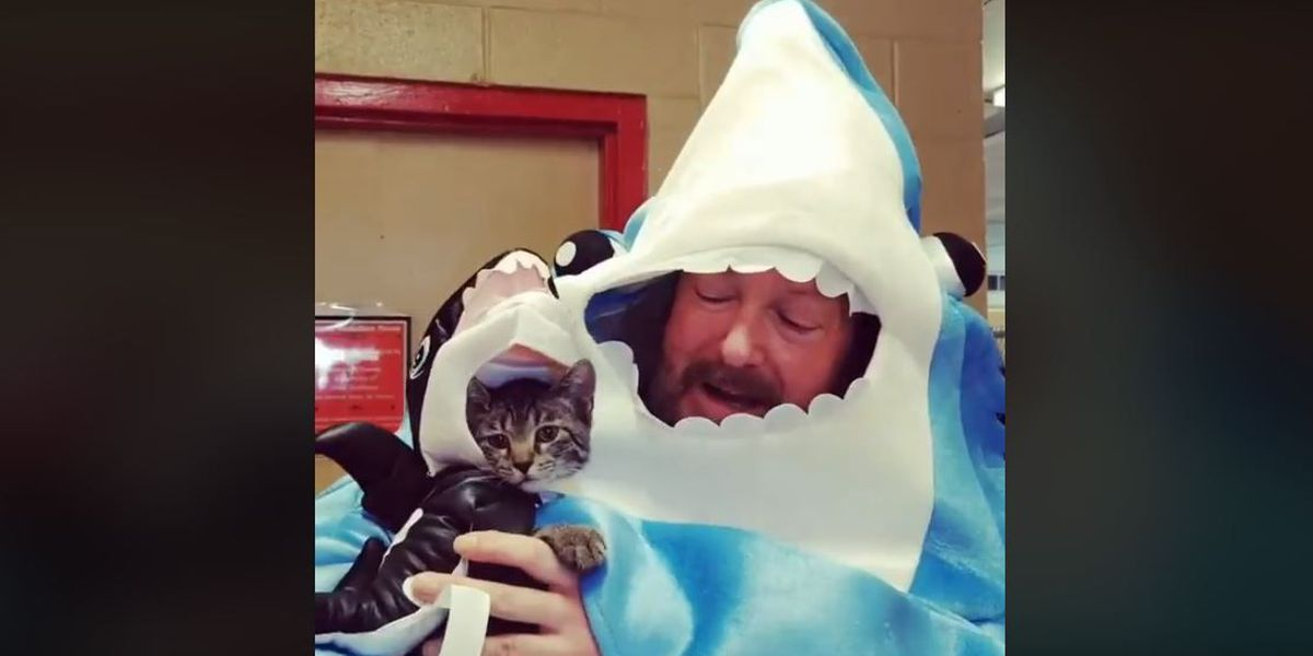 Animal shelter uses costumes to boost pet adoptions