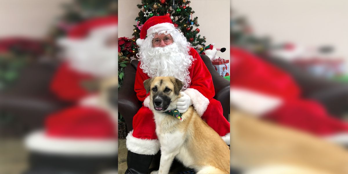 Santa reads to Collierville shelter pets