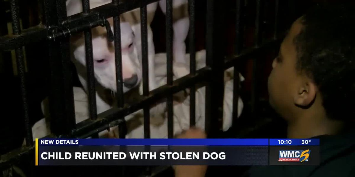 Dog stolen from 12-year-boy reunited with family