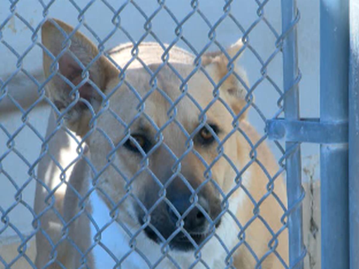 Investigation into Oxford Animal Shelter finds no criminal wrongdoing