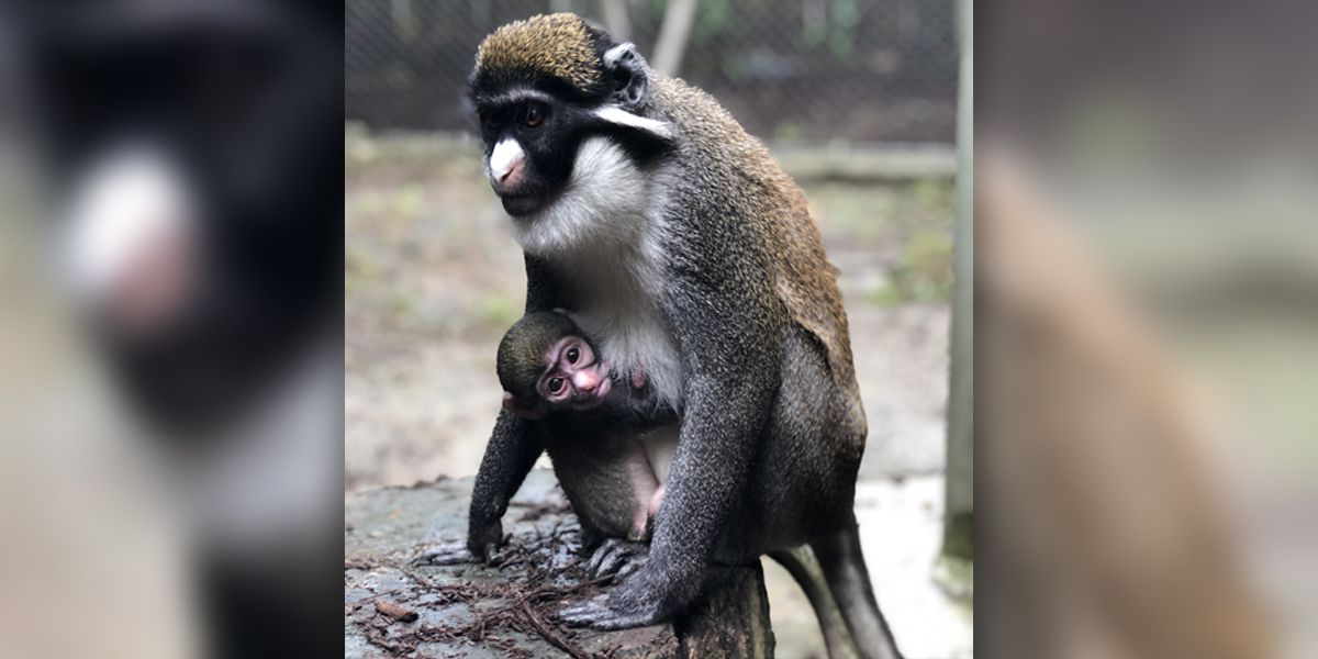Check out the youngest animals at the Memphis Zoo Saturday for Baby Day