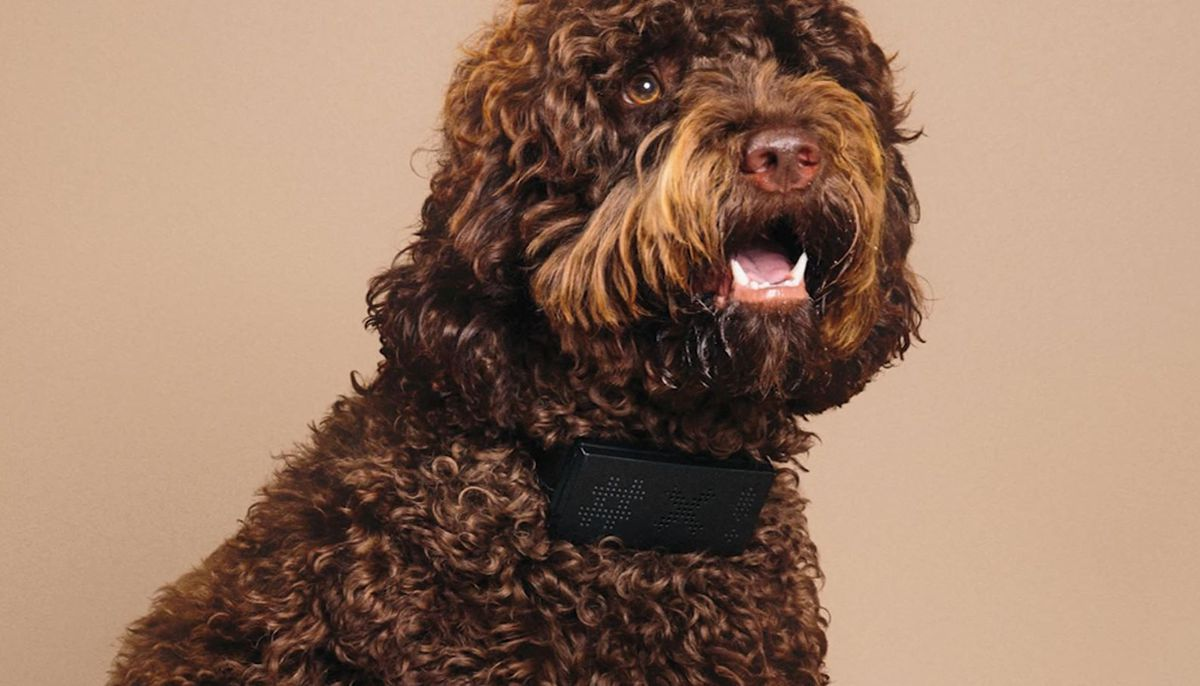'Cuss Collar' swears each time your dog barks
