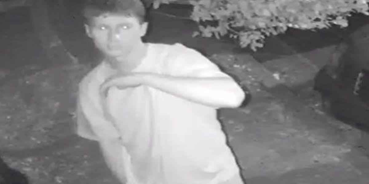 Ole Miss PD looking for man linked to vandalism